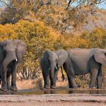Kruger National Park,               <br>     meeting South Africa